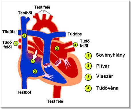 vegetatív dystonia és magas vérnyomás