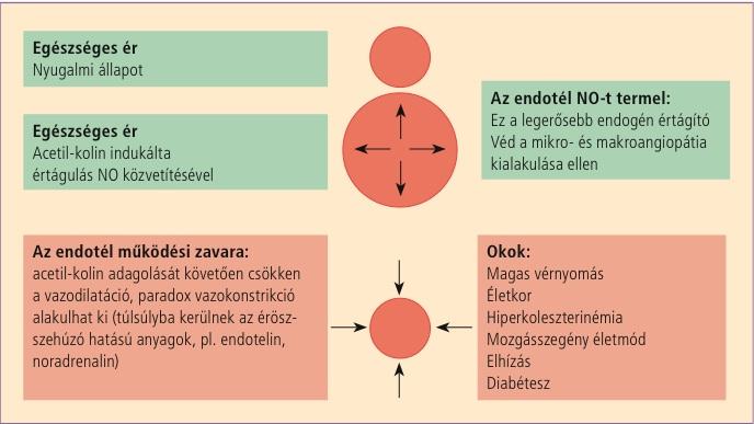 magas vérnyomás fizikai aktivitás