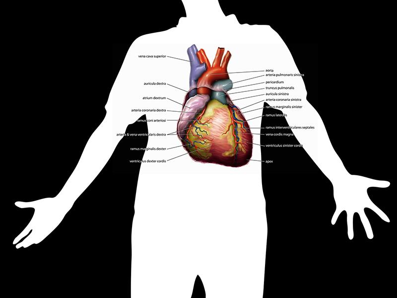 mik a hipertónia receptjei izolált magas vérnyomás fiatal korban