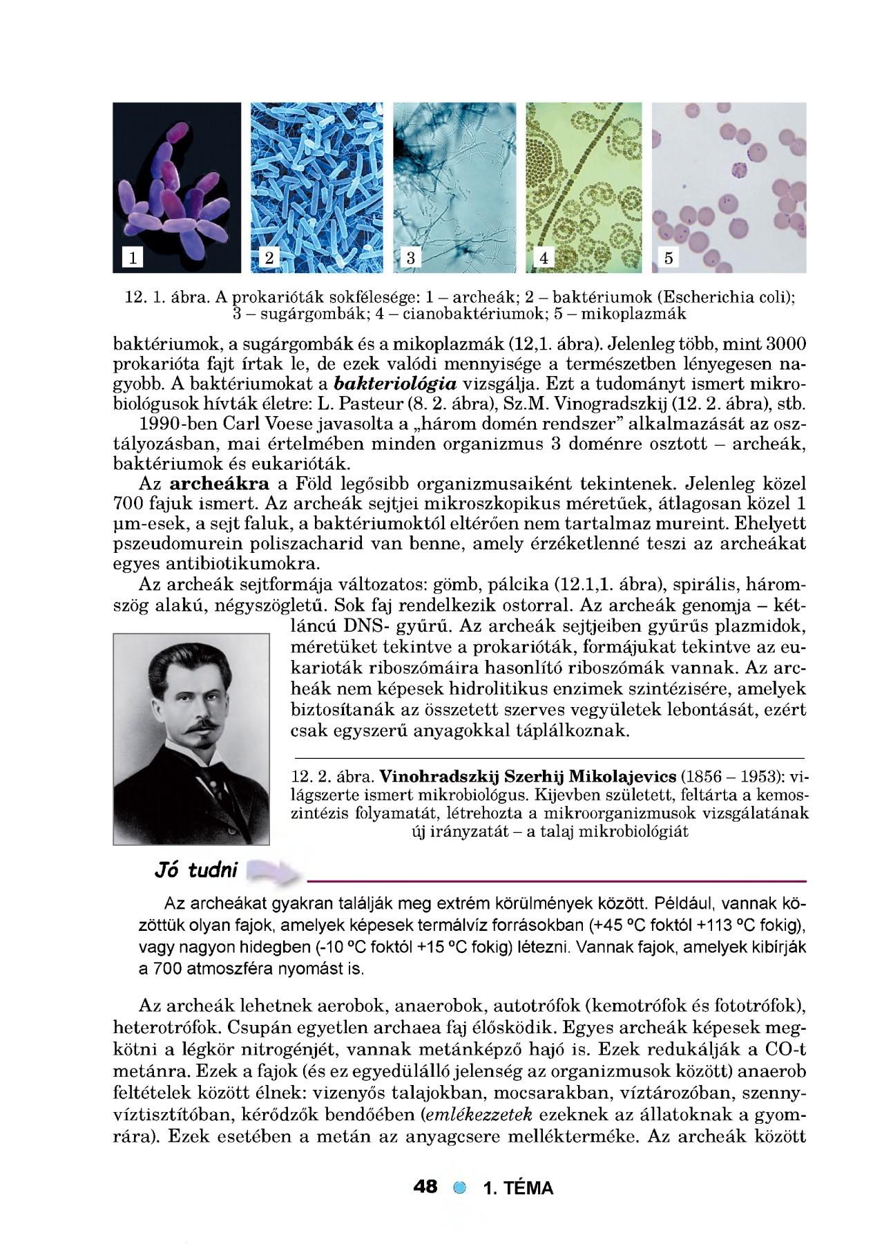 hipertónia kód a mikrobiológia 10-hez felnőtteknél