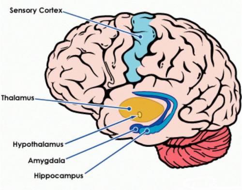 A kortikális atrófia okai, tünetei és kezelési irányelvei - Aritmia November