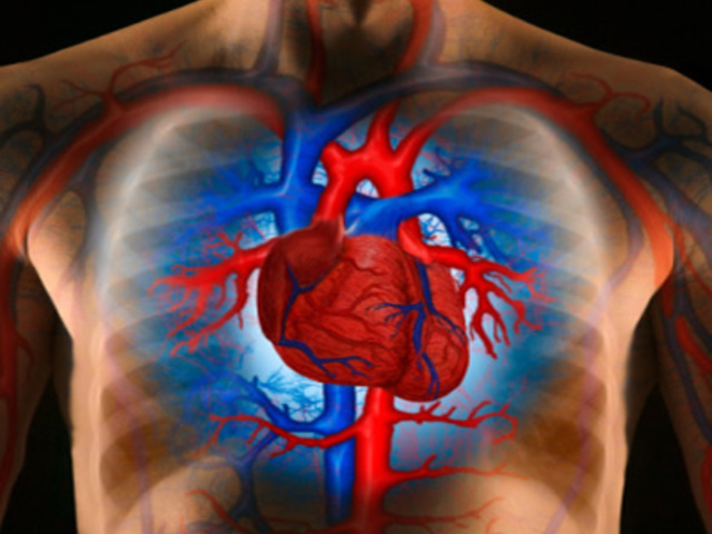kismedencei szervek magas vérnyomásban