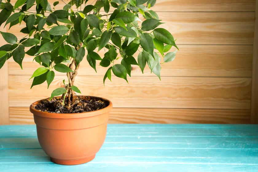 40+ Best Gyógyító növények images in | növények, gyógynövények, egészség