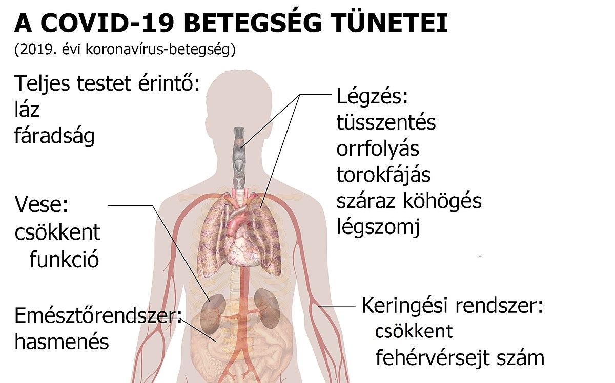 magas vérnyomású ételekkel EKG 2 fokozatú magas vérnyomás